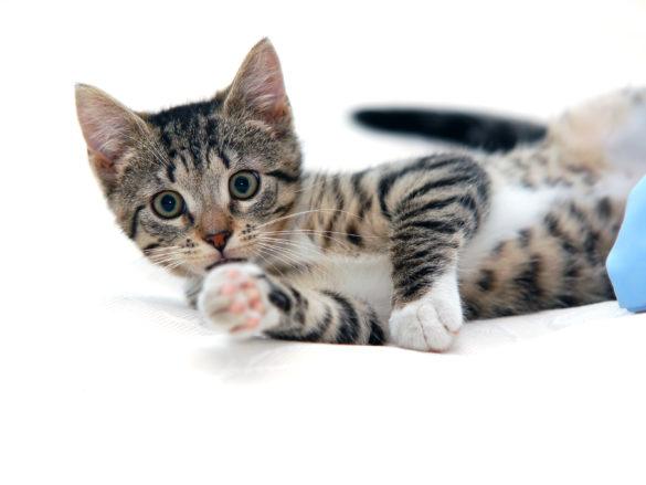 Keď mačka značkuje gauč